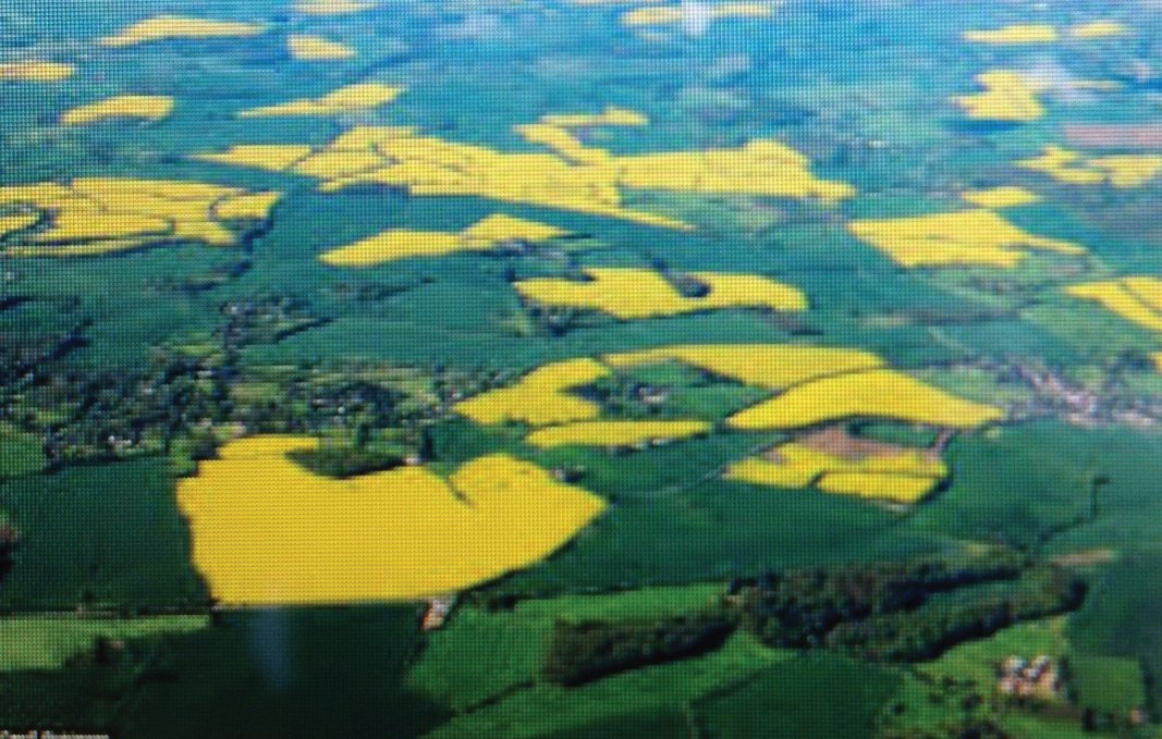 Birds Eye View of the Yellow crops